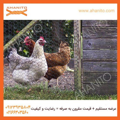 کاربرد های توری مرغی چیست؟